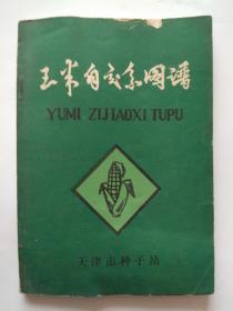 玉米自交系图谱-天津市种子站