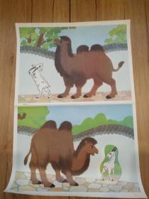 骆驼和羊(二)(六年制小学课本语文第三册教学图片(上)15(5))