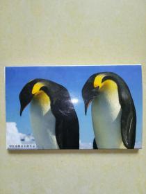 罗红南极帝企鹅作品明信片12张.