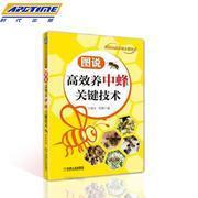 图说高*养中蜂关键技术 中华蜂土蜂中蜂饲养新技术 中蜂养殖技术 养蜂技术养蜂书养蜂蜜蜂 蜜蜂养殖技术大全书   9787111577065