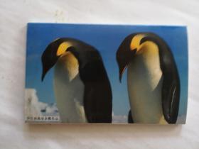 罗红南极帝企鹅作品  明信片全12枚