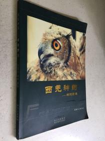 西羌神韵—绵阳野鸟(铜版纸彩印)