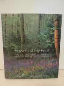 我脚边的花海:英国、爱尔兰野生花草摄影集 大型画册 Flowers at My Feet: The Wild Flowers of Britain and Ireland in Photographs (自然地理)英文原版书