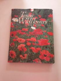 TEXAS WILDFLOWERS 德克萨斯州的野花