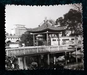 六十年代公园风景照片一枚
