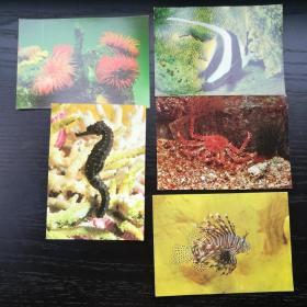 明信片 民主 德国 东德 施特拉尔松德 海洋博物馆 5张合售