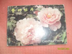 无邮资明信片:曹州牡丹(现有八张,应当是10张)