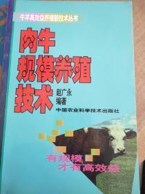 肉牛规模养殖技术