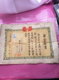 毕业证书(1955年哈尔滨市第十一中)初中毕业 带成绩表