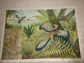 初中中学动物学教学挂图 脊椎动物-鸟纲第一辑 始祖鸟
