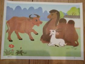 骆驼和羊(三)(六年制小学课本语文第三册教学图片(上)15(6))