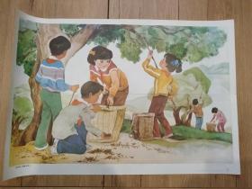收树种-基础训练1(六年制小学课本语文第三册教学图片(上)15(3))