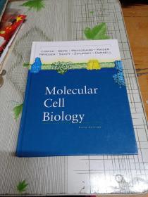MoIecuIar CeII  BioIogy分子细胞生物学(书里个别页面中有划线)外文原版