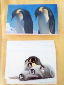 罗红南极帝企鹅作品(明信片一套12张)有封套