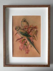 皮雕装饰画(鹦鹉)