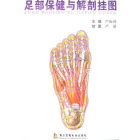 足部保健与解剖挂图