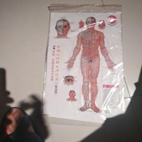 标准人体针灸穴位图使用说明