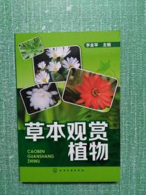 草本观赏植物