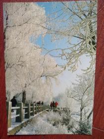 1986年吉林市风光明信片,江边雾凇(经典照片),(单张)