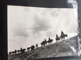 五六十年代原版老照片  牧牛  (早期摄影记者拍摄)