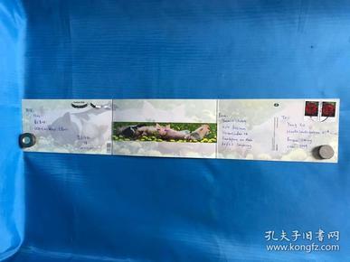 豬年國外郵票名信片連卡
