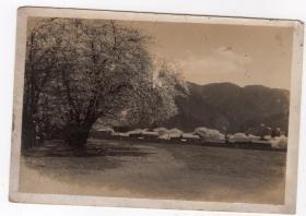 民国报纸图片类----民国原版老照片--1930年前后时间,日本村庄3