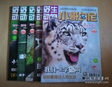 野生动物画报 小哥白尼(2019年1~6)