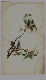 民国木版水印花笺纸:多色套印花卉笺(9)