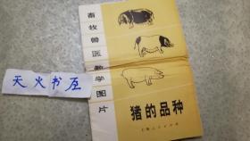 畜牧兽医教学图片:猪的品种(全套5幅 )含说明书  品相如图