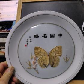 中国名蝶(箭环蝶)  标本在一磁盘内制作,外有圆凸形玻璃罩。