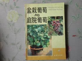 盆栽葡萄与 庭院葡萄