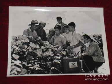 上海农业药械厂的工人,技术员在郊区农村,征求人民社员对使用农药农械的意见   照片长20厘米宽15厘米    A箱