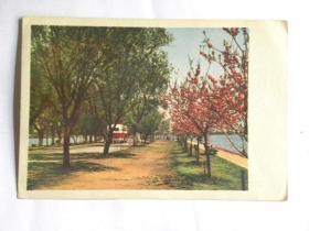 《西湖之春》明信片-白堤(50年代)