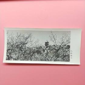 青岛前海栈桥【50年代老照片】