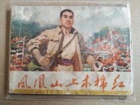 凤凰山上木棉红