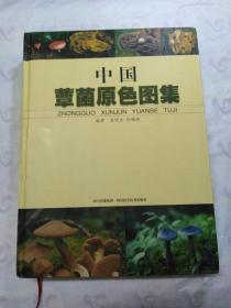 中国蕈菌原色图集 (正版品佳)