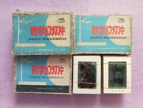 教学幻灯片 :初中植物(上下),初中动物(上下)【4盒合售】