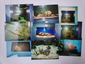 """2003年旅游美国新奥尔良""""水族馆""""拍摄的照片16张(15乘10厘米)"""