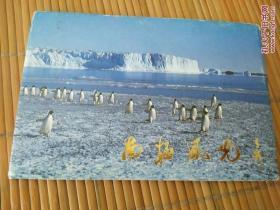 南极风光明信片10全(国家南极考察委员会)
