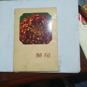 菊花明信片【全套十张】1964年原版1966年第三次印刷带函套【内近95品函套9品】