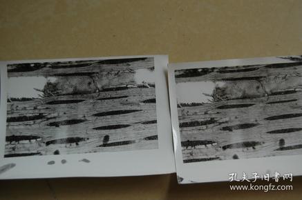 某植物研究院拍摄的一箱子木材纹理、木相、木材组织显微镜照片,大约500张