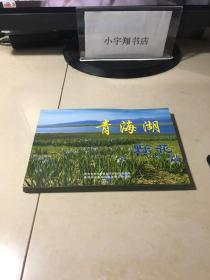 青海湖野花