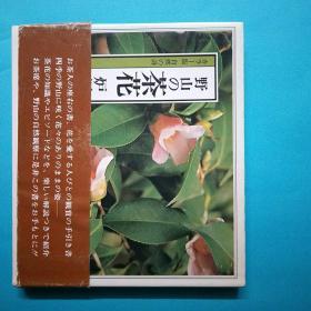 山の茶花  炉编 日文原版 腰封和签都在 花卉风景 铜版纸全图版图册