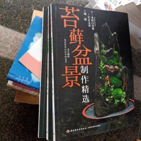 苔藓盆景制作精选