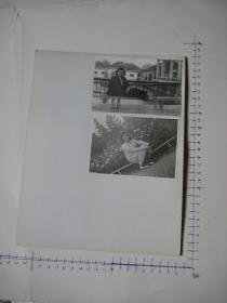 照片  黑白老旧照片  39    【 照片上的合售】