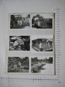 照片  黑白老旧照片  50  【 照片上的合售】