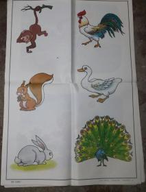 小学语文第一册教学挂图共18张合售