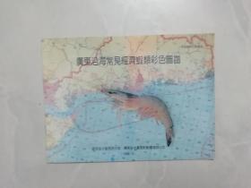 广东沿海常见经济虾类彩色图谱.