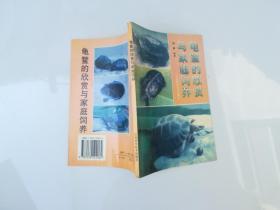 龟鳖的欣赏与家庭饲养