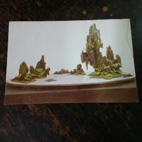 明信片实寄封(未经过邮局寄出)盆景一枚。